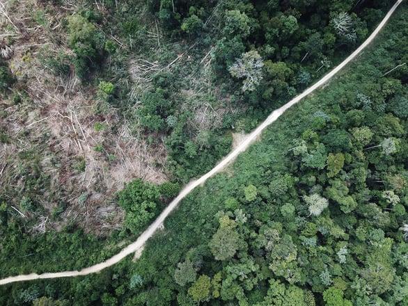 Rừng Amazon góp 20% khí oxy cho Trái đất, có đúng không? - Ảnh 2.