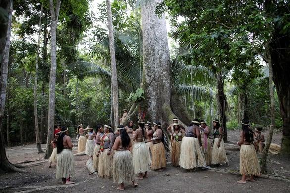 Rừng Amazon góp 20% khí oxy cho Trái đất, có đúng không? - Ảnh 4.