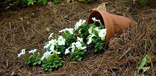 Spilling Flower Pot 1