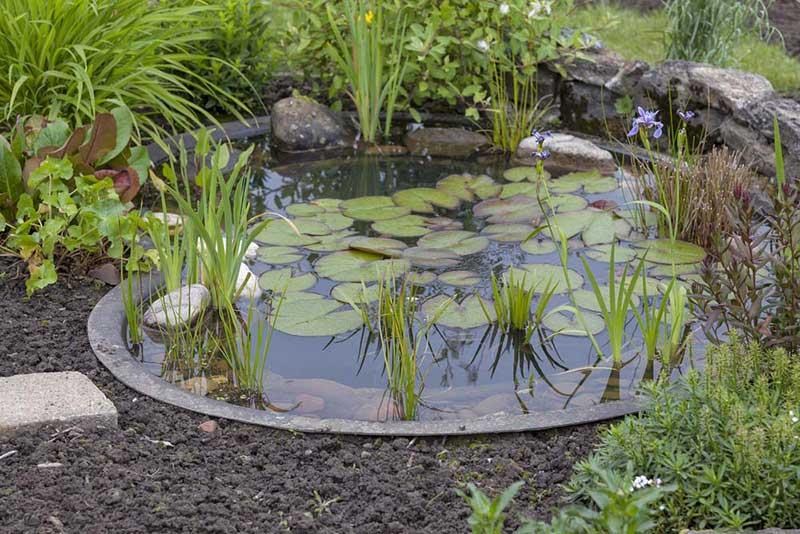 inground pond
