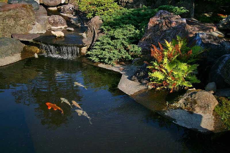 VianPool koi-pond