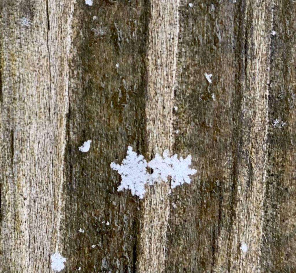 Hình dáng của Tuyết