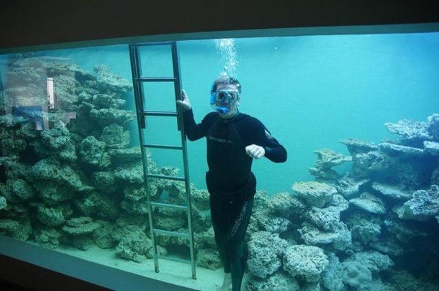 VianPool Doanh nhân xây thủy cung hoành tráng tại nhà hệt như dưới biển