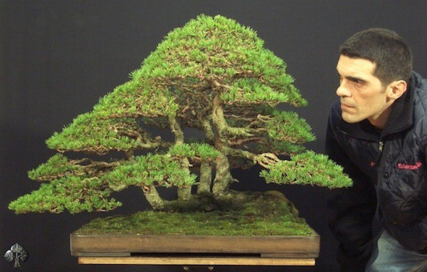 VianPool top-10-cay-bonsai-dep-nhat-the-gioi-anh-4