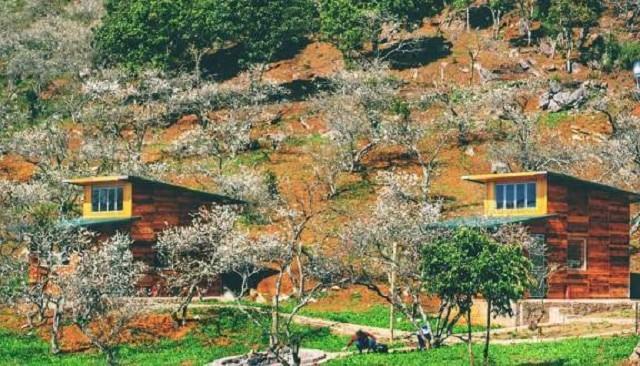 Tọa lạc giữa khu vườn rộng lớn, Homestay thiết kế với chất liệu gỗ mang đến vẻ đẹp hoàn hảo