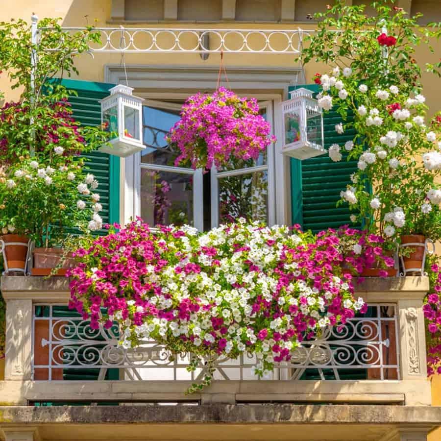 Thiết kế giàn hoa ban công đầy màu sắc