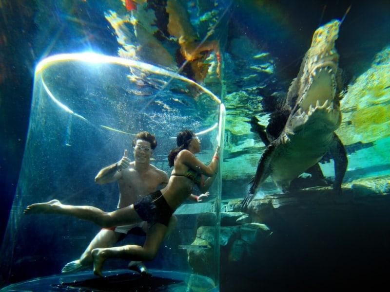 Du khách có thể chụp hình với cá sấu con và đối mặt với cá sấu mẹ khi ở trong lồng