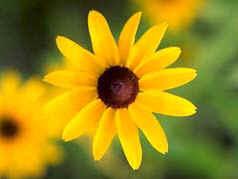 VianPool bi-an-day-so-fibonacci-va-su-trung-hop-kinh-ngac-trong-tu-nhien-8