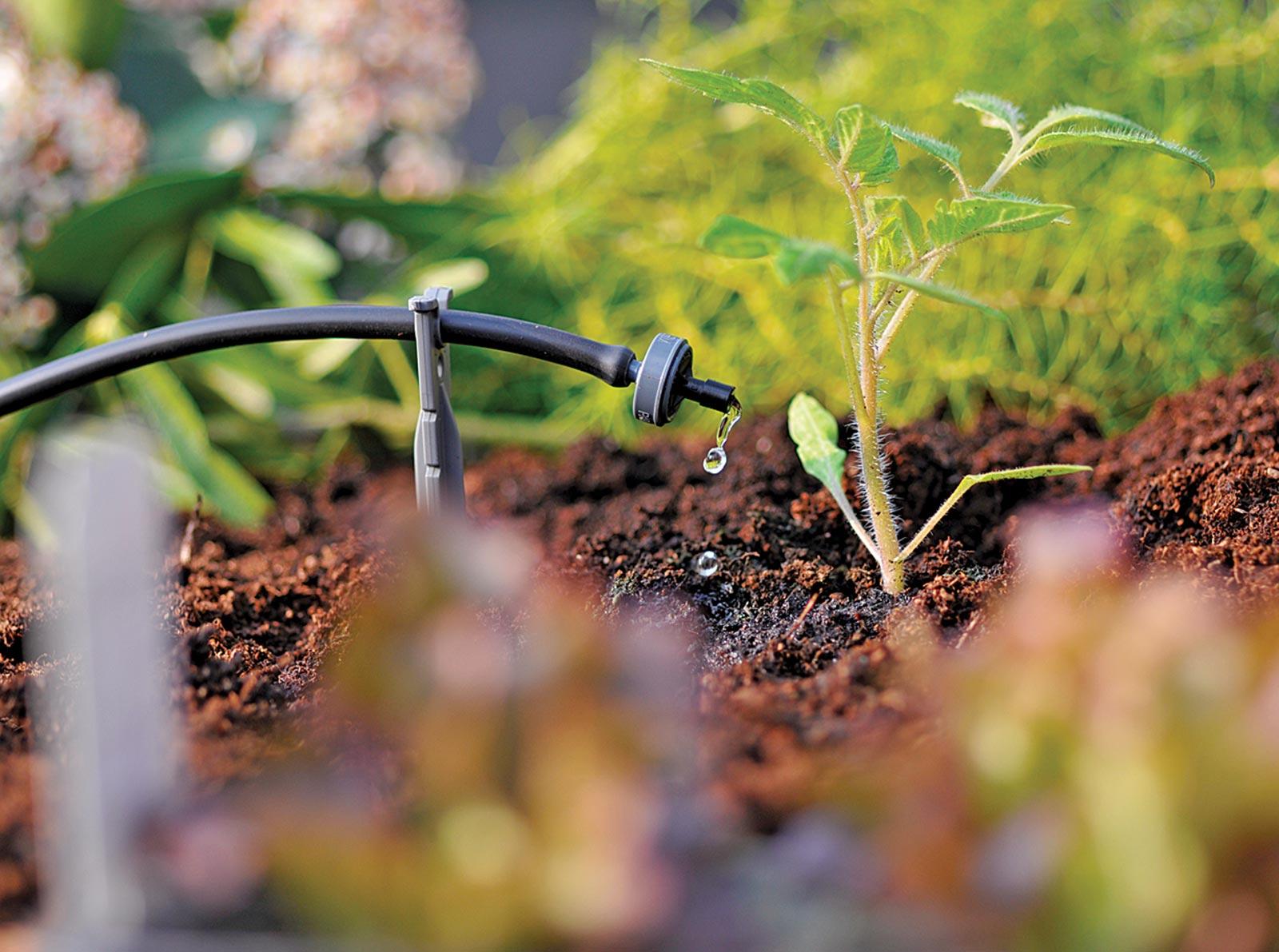 VianPool Top 17 loại cây lọc không khí hiệu quả nên trồng, dễ chăm sóc