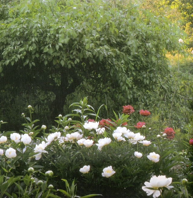 Bỏ phố về quê, bà cụ U100 biến mảnh đất quê thành căn nhà vườn trị giá 2 triệu USD, tận hưởng cuộc sống đẹp như tranh vẽ - Ảnh 7.